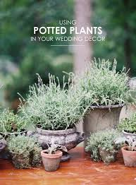 Potted Plants Wedding Centerpieces by 241 Best Diy Wedding Tutorials Images On Pinterest Hairstyles