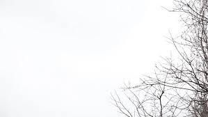 tree branches on the background of white sky by grey coast media