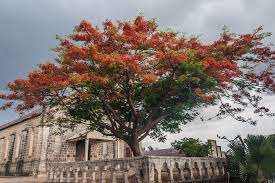 Trees Worldwide Spotlight Trees Discover
