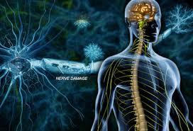 Webmd Human Anatomy Massage For Ms U2014 Northwest Wellness Voted Best Chiropractor In