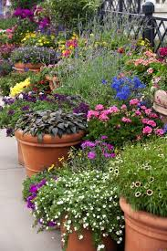 Garden Pots Ideas Outside Flower Pots Edinburghrootmap