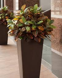 silk plants deluxe croton silk floor plant at officescapesdirect
