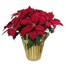 home accents holiday christmas 21 in red silk poinsettia in foil