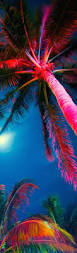 Pom Trees Top 25 Best Palm Tree Pictures Ideas On Pinterest Palm Trees
