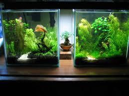 Aquascape Aquarium Designs 225 Best Aquarium Images On Pinterest Aquarium Ideas Aquarium