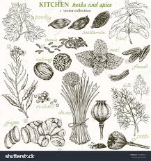 kitchen herbs royalty free kitchen herbs and spice vector u2026 165788624 stock