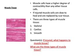 Anatomy And Physiology Cells And Tissues Anatomy And Physiology Connective Tissue Notes