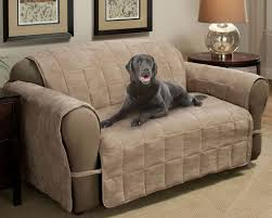 Sofa Protector Sofa Endearing Best Couch Covers For Pet Owners Miraculous Sofa