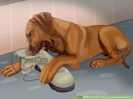 Can You Bury A Dog In Your Backyard 3 Ways To Stop A Dog U0027s Unwanted Behavior Wikihow