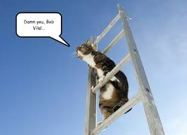 Ladder Meme - lolcats ladder lol at funny cat memes funny cat pictures with