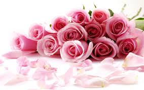 awesome looking flowers awesome looking roses picture for fb share pink rose graphics99 com