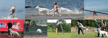 belgian shepherd quotes born to win warriors u2013 active dogs u0026 active people