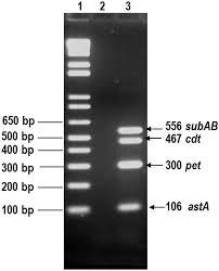 diarrheagenic escherichia coli carrying supplementary virulence