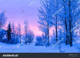 orange pink winter frosted trees stock photo 132185480