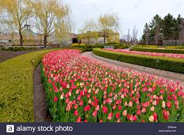 Botanical Gardens In Illinois Tulip Flower Beds In The Chicago Botanical Gardens Chicago