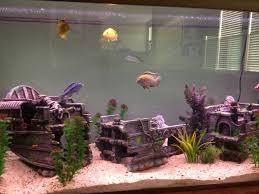my 75 gal sunken ship cichlid tank aquariums