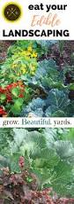 167 best edible landscaping u0026 companion planting images on