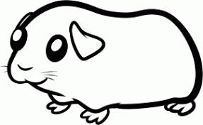 drawn guinea pig drawn pencil color drawn guinea pig drawn