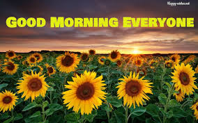 sunflower pictures 20 morning wishes with sunflower happy wishes
