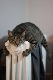 Seeking Hilarious Hilarious Photos Of Cats Keeping Warm Will Teach You New Ways To