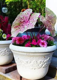 Garden Club Ideas 985 Best Garden Club Images On Pinterest