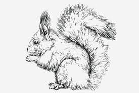 5 amazing squirrel crafts for preschoolers
