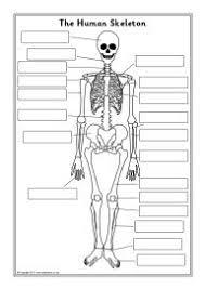 Human Anatomy Skeleton Diagram Human Skeleton Labelling Sheets Cc Cycle 3 Week 2 Pinterest