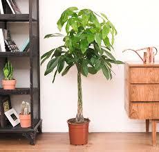 chambre de culture pas cher 30 génial plante interieure fleurie pour chambre de culture pas cher