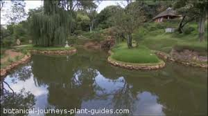 Pond Landscaping Ideas Large Pond Landscaping