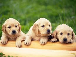 cute dog wallpapers best cute dog wallpaper ideas on pinterest dog wallpaper