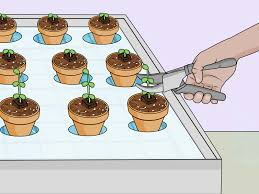 how to build a hydroponic garden with pictures wikihow