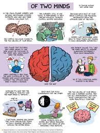 split brain operations seperate the brain hemispheres which