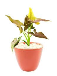 indoor plants online mandarin month the best indoor plants to