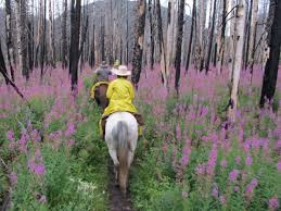 explore the bob marshall wilderness horse u0026rider western