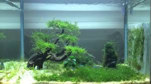 Aquascape Moss Aquascape Moss Growth Progress 2nd Week Youtube