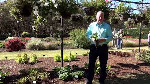 Fall Garden Plants Texas - in the garden with dave fall plants for north texas veggies