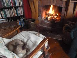 cats are where the warmth is martinborough musings