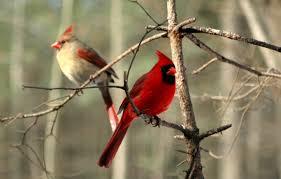attractive cornell backyard bird count ideas home design