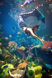 Silverton Casino Buffet Coupons by 81 Best Under The Sea Images On Pinterest Las Vegas In Las