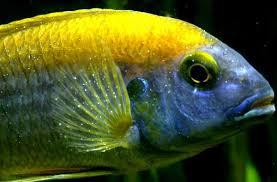 common aquarium fish diseases ornamental aquarium fish