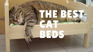 the best cat beds 2017 high bed reviews for large cats