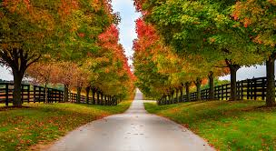 Kentucky Scenery images These are the best places to see fall foliage in kentucky jpg