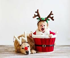 baby christmas image result for christmas card photo ideas with dogs christmas