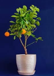 miniature fruit trees lovetoknow