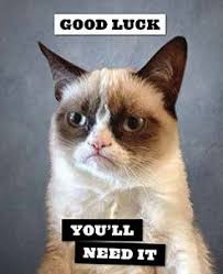 Angry Cat Meme Good - image result for cuteness overload omg pinterest grumpy cat