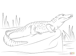 nile crocodile side view coloring page free printable coloring pages