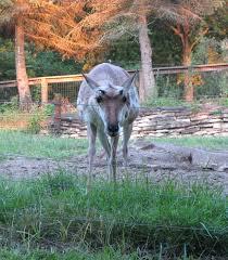 tr multi zoo triggered fort wayne children u0027s zoo and columbus