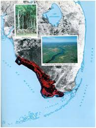 Map Southwest Florida by Sofia Pp 1011 Ecosystems Of South Florida Coastal Ecosystems