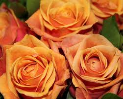 Best Flower Delivery Service Best Sympathy Flowers Delivery Manila Homepage Jpg