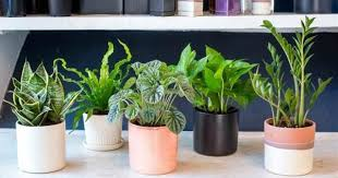 Air Purifying Plants 9 Air by Can Plants Improve Our Children U0027s Performance In The Classroom